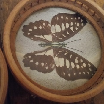 Encased 'Rear Butterflys' ?  - Kitchen
