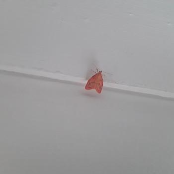 Unusual moths? - Animals
