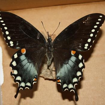 Three Pinned Flutterbys - Animals
