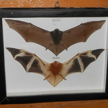 More Halloween - Framed Bats and One Loose - Animals