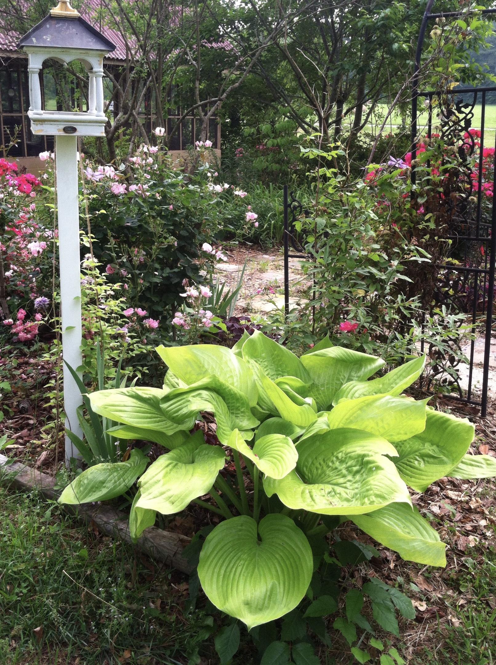 Along My Garden Path Collectors Weekly