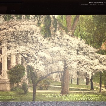 """1920? """"Grandfather Planted This Dogwood In His Yard"""" Postcard  - Postcards"""
