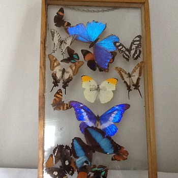 Vintage butterflies framed - Fine Art