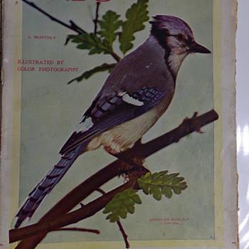 Birds, 1897 - Paper