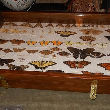The Ultimate Butterfly Collection Plus Find the Hidden Cat! - Animals
