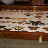 The Ultimate Butterfly Collection Plus Find the Hidden Cat!