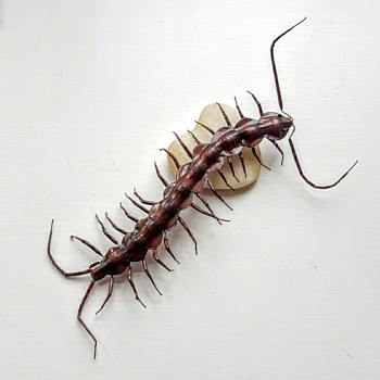 Huge centipede... Painted iron magnet. - Animals