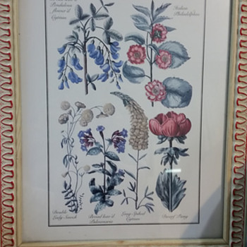 Cream and red frames flower species
