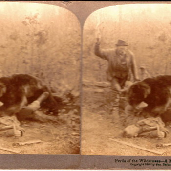 Perils of the Wilderness - A Fight for Life - Photographs