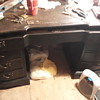 Got this desk by accident at an auction.ndidnt realize what we had til we got home and cleaned it up.