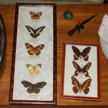 Butterfly Collections - Animals