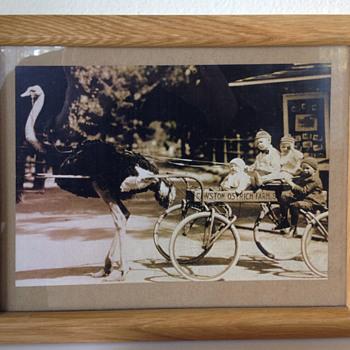 Cawston Ostrich Farm - Photographs