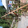 OLD Wooden Flail for Threshing Grain + 2 Old  Sickles