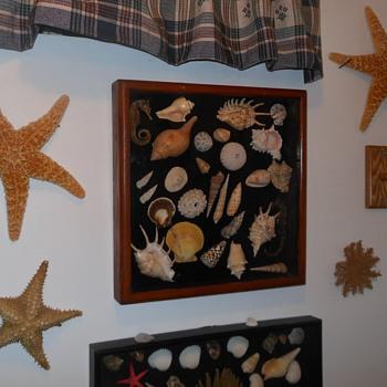 Seashell Shadowbox From Pomona Sreet Fair - Animals