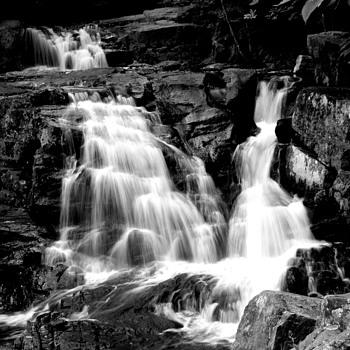 Fallow Me.... - Photographs