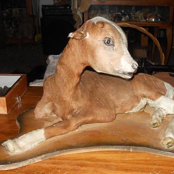 Taxidermy Calf - Animals