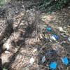 Bower bird nest update