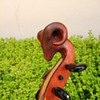 Rams Head Fiddle