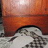 New England Blanket Chest Detail Photos