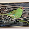 Red Crown Parakeet by Randall Wood