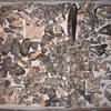 fossils,shark,whale,fish,teeth-ear bones,vertibrates++