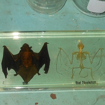 Real Bats and Creepy Crawlies - Animals