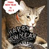 HAPPY NEW YEAR TO ALL CW Friends!!