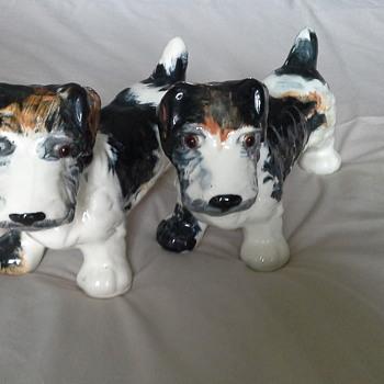 Sealyham terriers - Animals