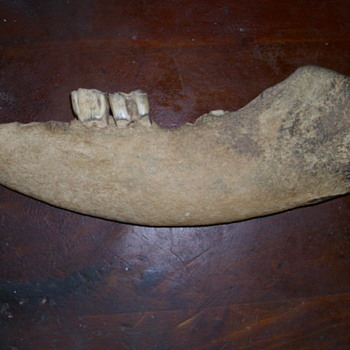 Old Jaw bone to Identify - Animals