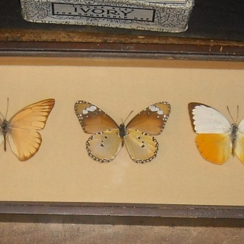 Small Butterfly Collectio. - Animals