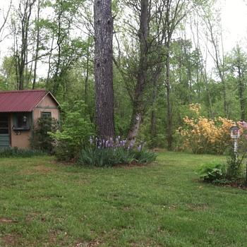 Deciduous Azaleas brightening Springtime - Photographs