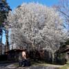 early springtime 2019