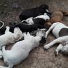 pile-o-sleepy puppydawg faces