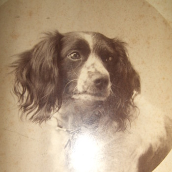 Cabinet card of a dog - Photographs