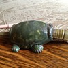 Grandpa's Bite Me Turtle Toy