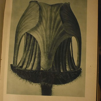 Karl Blossfeldt!  Complete works from 1948! - Fine Art