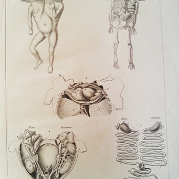 Anatomical prints