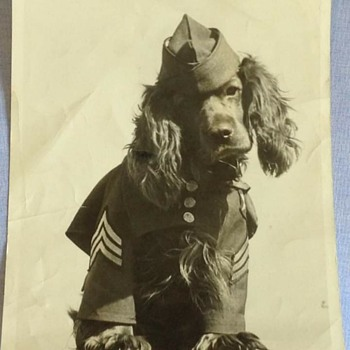 WW2 photo of an US Army dog  - Military and Wartime
