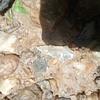 Native American crystal  projectile point NC  Randolph arrowhead