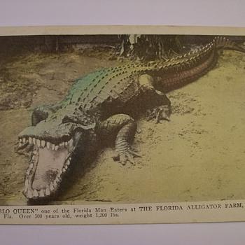 "1920's Alligator Farm Of Jacksonville Florida ""Tourist Postcards"" - Postcards"