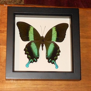Various Framed Butterflies - Animals