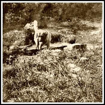 1895 Quebec Dog Sled Memory - Photographs