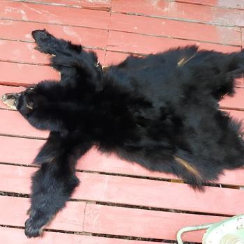 Taxidermy Tuesday A Bear Skin Rug I will Call It George - Animals
