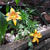 Dedrea's orange flowers