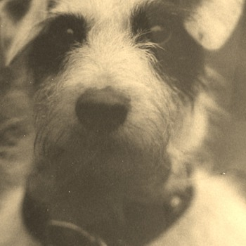 Rator The Terrier Art Photography 1921 By Rufus James Foster