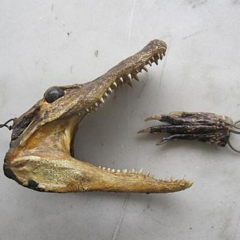Aligator head - Animals