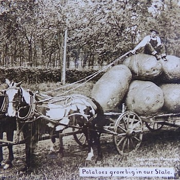 Potatoes Grow Big in Our State - Postcards