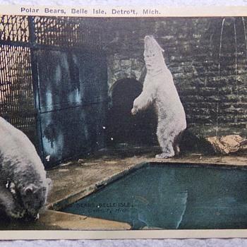 Polar Bears on Belle Isle, 1922 - Postcards