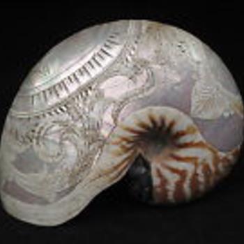 Rare engraved nautilis shell