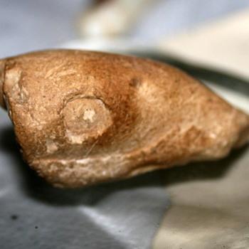 A Kansas Fossilized Fish or Crawdaddy? - Animals